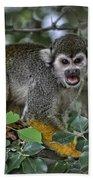 Monkeying Around Beach Sheet