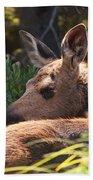 Moose Baby 5 Beach Towel
