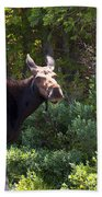 Moose Baxter State Park 4 Beach Towel