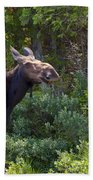 Moose Baxter State Park Maine 3 Beach Towel