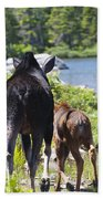 Moose Ends Baxter State Park Maine Beach Towel