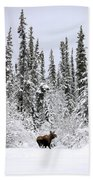 Moose In Deep Snow, Near Teslin, Yukon Beach Towel