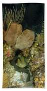 Moray Eel, Belize Beach Towel
