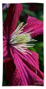 Morning Clematis Beach Towel