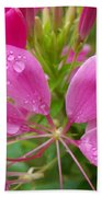 Morning Dew On Pink Cleome Beach Towel