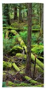 Moss And Fallen Trees In The Rainforest Of The Pacific Northwest Beach Towel