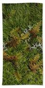 Moss And Lichen Beach Sheet