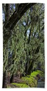 Moss Covered Trees Beach Sheet