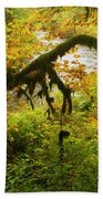 Moss In The Forest Beach Towel