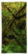 Moss In The Rainforest Beach Towel