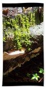 Mossy Waterfall On Mushroom Rock Beach Towel
