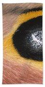 Moth Automeris Zozine Detail Of False Beach Towel