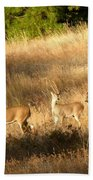 Mother And Twins Beach Towel