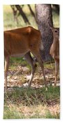 Mother And Yearling Deer Beach Towel