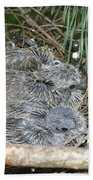 Mourning Dove Chicks Beach Towel