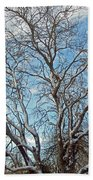 Mulberry Tree In Snow Beach Towel