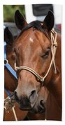 Mule Days Benson Beach Towel
