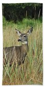 Mule Deer Winthrop Wa 9176 Beach Towel