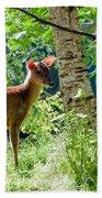 Muntjac Deer - Muntiacus Reevesi Beach Towel