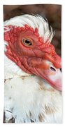 Muscovy Type II Beach Towel