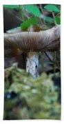 Mushroom Up Close 7046 1676 Beach Towel
