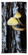 Mushrooms 3 Beach Towel