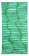 Mussel Gill Lm Beach Towel