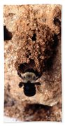 Mustached Mud Bee Beach Towel