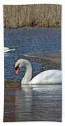 Mute Swans On A Cape Cod Pond - Cygnus Olor - Quissett  Massachusetts Beach Towel