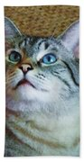 My Beautiful Blue Eyed Tiger Boy Beach Towel