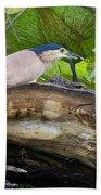 Nankeen Night Heron Beach Towel