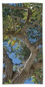 Naples Tree Beach Towel