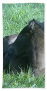 Napping Colt Beach Towel