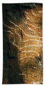 Nature's Abstractions IIi Beach Towel
