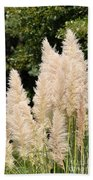 Nature's Feather Dusters Beach Towel