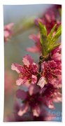 Nectarine Blossoms Beach Towel