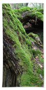 New Hampshire Usa Forest Beach Towel