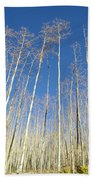 New Mexico Series - Leaf Free On The Mountain Beach Towel