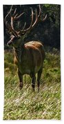 New Zealand Elk Beach Towel