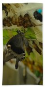 Newborn At The Butterfly Factory  Beach Towel