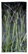 Night Walk Through The High Grass Beach Towel
