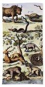 North America: Fauna Beach Towel