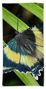 North Queensland Day Moth Alcides Beach Towel
