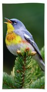 Northern Parula Parula Americana Male Beach Towel