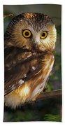 Northern Saw-whet Owl Beach Towel