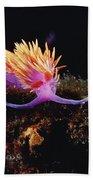 Nudibranch Brightly Colored Arctic Ocean Beach Towel