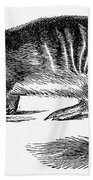 Numbat Beach Towel