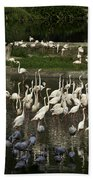 Number Of Flamingoes Inside The Jurong Bird Park In Singapore Beach Towel