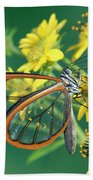 Nymphalid Butterfly Pteronymia Sp Beach Towel
