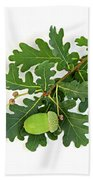 Oak Branch With Acorns Beach Towel by Elena Elisseeva